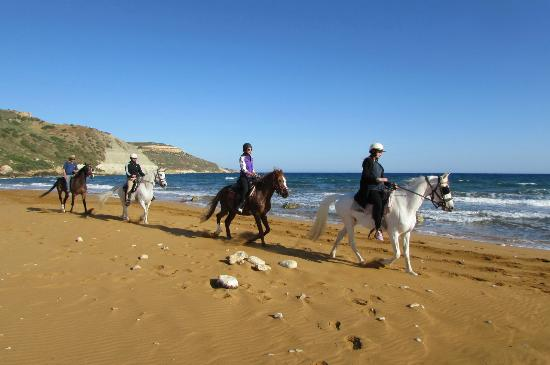 horse riding in Malta